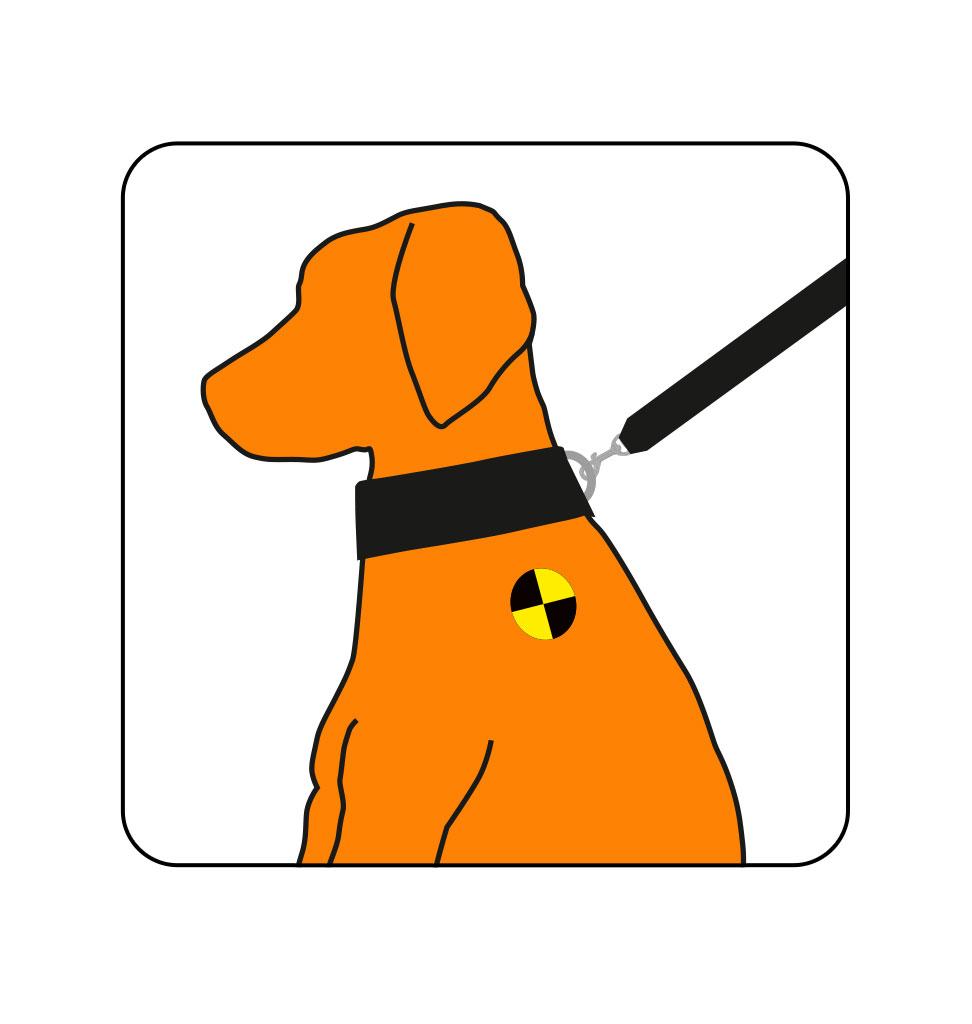 Trailstone hondenriem 2